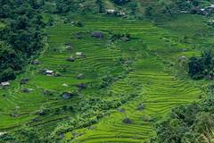 Výlet na motorce do Hoang Su Phi (zcesty) Tags: vietnam22 terasa rýže pole krajina vietnam dosvěta hàgiang vn