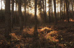 Early Morning Woodland Light (Tracey Whitefoot) Tags: 2018 february winter tracey whitefoot nottinghamshire notts sherwood forest woods woodland robin hood a614 light tree trees morning