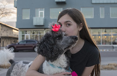 Girl & Dog & Pink (JasonCameron) Tags: dog puppy pup poodle cut fur pink black girl valentine shoot love cute cuddle sweet