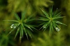 Asymétrique (annabuni) Tags: asymétrique nature macro macrophotographie goutte goutelettes hiver winter pluie rain drops tamron lens 90mm f28 vi usd sony alpha slta58 anna bunichon onnalua annarchie