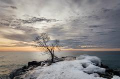 (Lisa de-Jong) Tags: nikon d7100 toronto ontario canada february winter 2018 viewsfromlisa