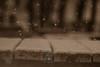 240A3954 (JoseFuko8) Tags: nieve fuentesauco zamora paisajes nevada invierno canon 7d mark ii pueblo campo