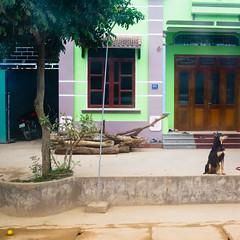 the dog and the obnoxious lemon (monsieur ours) Tags: vietnam dog chien lemon citron obnoxious odieux fromthebus depuislebus roadside trajet voyage travel couleur color square carré
