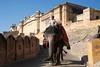 _DSC2075 (frangher) Tags: rajasthan jaipur amberfort india viaggi travel nikon d3100