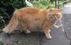 "Onomichi-034 (photozaki) Tags: ""dogs cats"" dog dogs inu cat cats neko shikoku japan ohenro88 ohenro pilgrimage"