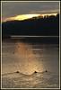 Gemeinsam der Sonne entgegen... (Renata1109) Tags: wasser baum himmel wald strand sonnenaufgang see landschaft vogel morgen spiegelungen berg bayern deutschland