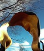 Gold (Ean Morgan) Tags: arch veil gateway statue sculpture colorado loveland gold cloth fabric motioncapture frozenintime mitresquaremurder ean morgan