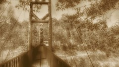 Un puente no se sostiene de un solo lado. (FOTOS PARA PASAR EL RATO) Tags: méxico estadodeméxico árboles sepia bosque rio puentes puente
