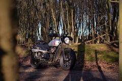 Triumph Bonneville Street Twin (thefooleryoftom) Tags: triumph motorcycle motorbike bonneville street twin bike offroad off road scrambler scrambling essex green lane byway forest england uk britain nikon d7000 35mm