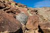 Clark Dry Lake Petroglyphs (W9JIM) Tags: rockart petroglyphs w9jim petroglyph abdsp anzaborrego clarkdrylake 5d4 24105l