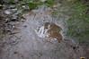 Ψίνθος (Psinthos.Net) Tags: ψίνθοσ psinthos january ιανουάριοσ γενάρησ χειμώνασ winter nature countryside φύση εξοχή απόγευμα afternoon απόγευμαχειμώνα χειμωνιάτικοαπόγευμα βροχερόαπόγευμα rainingafternoon χόρτα greens path μονοπάτι λιθόστρωτο paved leaves winterleaves φύλλα φύλλαχειμώνα χειμωνιάτικαφύλλα νερό water λακκούβα πέτρεσ stones mud λάσπη χώμα soil mirroring καθρεφτισμόσ psinthosvalley valley κοιλάδα κοιλάδαψίνθου κοιλάδαψίνθοσ humidity υγρασία λειχήνεσ lichens oleander reeds καλάμια καλαμιέσ πικροδάφνη branches κλαδιά