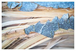 Broken bark