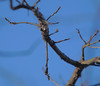 P1184495 (Paul Henegan) Tags: 67crop blur branches droplets highlights ice oak selectivefocus shadows sky twigs winter