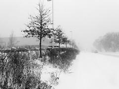 A walk in the snow 2 (Thiophene_Guy) Tags: thiopheneguy originalworks xz1 olympusxz1 camerawrappedinbreadbagtapedclosedarounduvfilter
