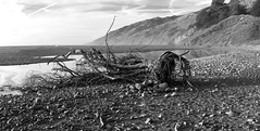 Dead Wood _ bw (Joe Josephs: 3,166,284 views - thank you) Tags: bigsur california californiacoast californialandscape pacificcoasthighway pacificocean travel travelphotography westcoast scenic tree bw monochrome blackandwhite blackandwhitephotography californiabeaches landscapes