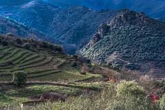 Terras do Bolo.... (loisrua +1.850.000 visitas.) Tags: viñas ourense valdeorras vino macizo central galicia o bolo