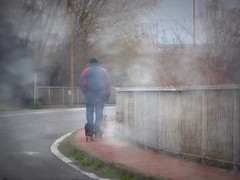 Walking the dogs (fotomie2009) Tags: valleggia pioggia fence rain road people dogs cani