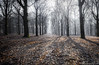 mighty forest (fransvansteijn) Tags: rood aoi elitegalleryaoi bestcapturesaoi aoi3levels
