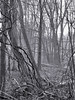 February - Winter Photo 17 - Morning Fog (Stans Gallery) Tags: winter february trees tree landscape fog mist vines blackandwhite woods forest water brrok creek stream reflections