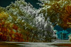 Infrared Colors (Bernai Velarde-Light Seeker) Tags: infrared ir hoyar72 bernai velarde trees park colors building panama city centralamerica urban