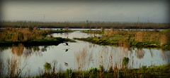Wildlife And Wetlands (gatorgalpics) Tags: gainesvillecitypark wetlands wildlife sweetwaterwetlandspark explore140