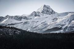 (Marie-Laure Even) Tags: 2017 alberta amériquedunord arbre canada december décembre fjall forest forêt hiver jaspernationalpark landscape marielaureeven montagne mountedithcavell mountain nature neige nikond7100 northamerica paysage roadtrip snow travel tree voyage wild wilderness winter wood гора природа jasper