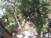 G0121341 (harleyhurricane1) Tags: line zip zipline ziplinepark dadecityflorida treehoppers centralflorida largestziplineparkincentralfl dadecity