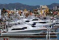 Fishing Boats (Sandra Leidholdt on Autumn Break) Tags: boat harbor marina fishingboats mexico cabo sandraleidholdt mexican méxico bajacaliforniasur cabosanlucas resort city building mountain