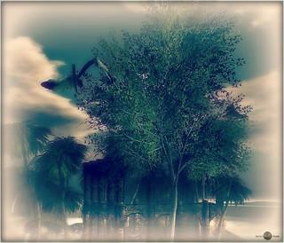 ╰☆╮The Little Branch - Katsura Tree animated╰☆╮
