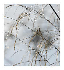 Dewdrops (Graham Pym) Tags: ice dew bokeh sunlight grass nikon nature droplets smileonsaturday roundandround rain