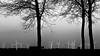 Windmills in B&W (tvdijk19) Tags: windmills flevoland netherlands holland windmolens fuji