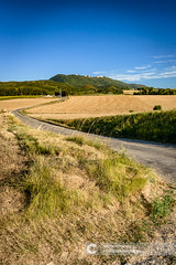 Typical French landscape in summer with grain fields (Fotografiecor.nl) Tags: farm industry meadow mountain rollingfields season sky trees agricultural agriculture background barley blue cereal combine corn countryside crop environment farming field fields gold golden grain green ground harvest harvester harvesting haystack hill hills hillside land landscape natural nature panoramic peak plant plowed ripe rural rye scene straw summer tree view wheat yellow