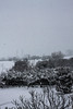 Snow (VikingAle) Tags: snow snowphotography neve freddo gelo inverno immortal black blackmetal blackandwhite postblack grimness 666 italy italian canon canonshots canonphotography canonph photography ph tree trees