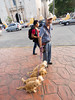 day nine in valladolid (dolanh) Tags: mexico dogs interior dogwalker yucatan valladolid