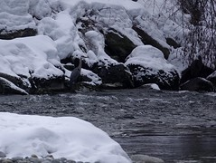 héron cendré (Carandoom) Tags: bird oiseau héron cendré water eau chamonix 2018 neige snow rivière