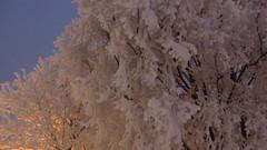 IMG_4342 (Mr Thinktank) Tags: raureif frost