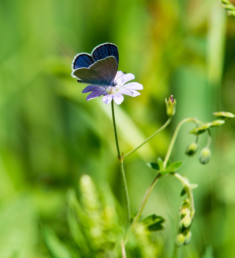 фото: Butterfly