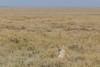 time to go :-) (Hector16) Tags: africa nomad safari outdoors tanzania ndutu drought wildlife serengeti shinyangaregion tz ngc