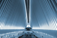 """Blue Oculus"" New York City (bobfromnewhaven) Tags: bobfromnewhaven dogwood2018 week6 manhattan oculus worldtradecenter lowermanhattan"