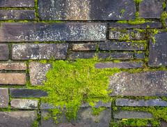 Mass Moss. (Omygodtom) Tags: abstract green wall brick red pond outside hiver explorer existinglight moss nikon70300mmvrlens digital d7100 texture contrast composition