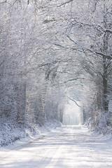 Der weiße Tunnel (Lilongwe2007) Tags: deutschland ahrensburg schnee frost weis eis allee natur bäume landschaft pflanzen winter sonne