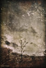 broken... (elle Q1) Tags: bare trees landscape sky distant solitary limbs winter muted colors digital photo art llester images