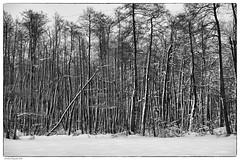 IIII (Andrej Nagode) Tags: vrhnika winder slovenia blackandwhite
