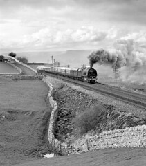 46229 Duchess of Hamilton crossing Birkett Common. (johncheckley) Tags: uksteam duchess railway train passenger drystonewall