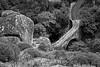 Vieux chemins de France (Yvan LEMEUR) Tags: aveyron pont vieuxpont pontdepierres vieuxchemins vieuxcheminsdefrance patrimoine histoire histoiredefrance bezbédène campouriez entrayguessurtruyère selves viadène saintamansdescôts truyère aubrac extérieur