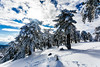 Snow at Troodos (128) (Polis Poliviou) Tags: snow nationalpark troodosmountains cypruscountryside clouds cloudy 2018 countryside freezing cyprus lovenature love naturepictures naturepics forest rural mount mountain mountains pinewood cold frost winter pinetrees pinetree mediterranean forestpark nationalforestpark olympus peak frozen morning environment nature ice snowtrees snowtree sports island cyprustheallyearroundisland cyprusinyourheart yearroundisland zypern republicofcyprus κύπροσ ©polispoliviou2018 polispoliviou polis poliviou πολυσ πολυβιου lovecyprus ski skateboard skiing skiers wood green earth canon