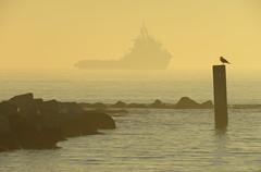 IMG_0083x (gzammarchi) Tags: italia paesaggio natura mare ravenna lidodidante alba barca nave animale uccello gabbiano palo scoglio monocrome