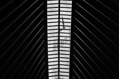 3,904M (Panda1339) Tags: thegreat50mmproject usa monochrome nyc newyorkcity abstract architecture lines 50mm wtc oculus graphic