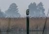 DSC_7985 (andreas_rothmund) Tags: bodensee konstanz reiher seerhein