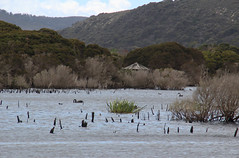 Bird hide, Wetlands in Narawntapu National Park, Tasmania (RossCunningham183) Tags: wetlandsinnarawntapunationalpark tasmania birdhide lake swans